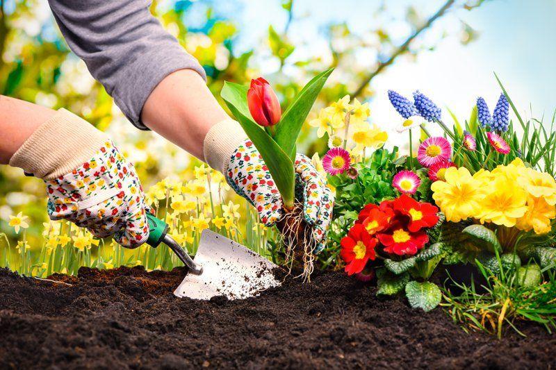 День дачника и огородника: традиции и обычаи праздника